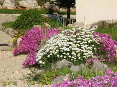 Květy M